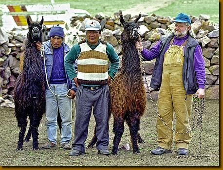 les types de laine chez le wooly lama 2. Black Bedroom Furniture Sets. Home Design Ideas